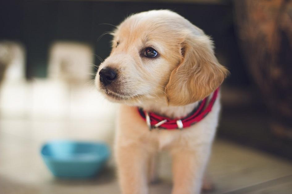 Ako sa v lete starať o vášho psa?